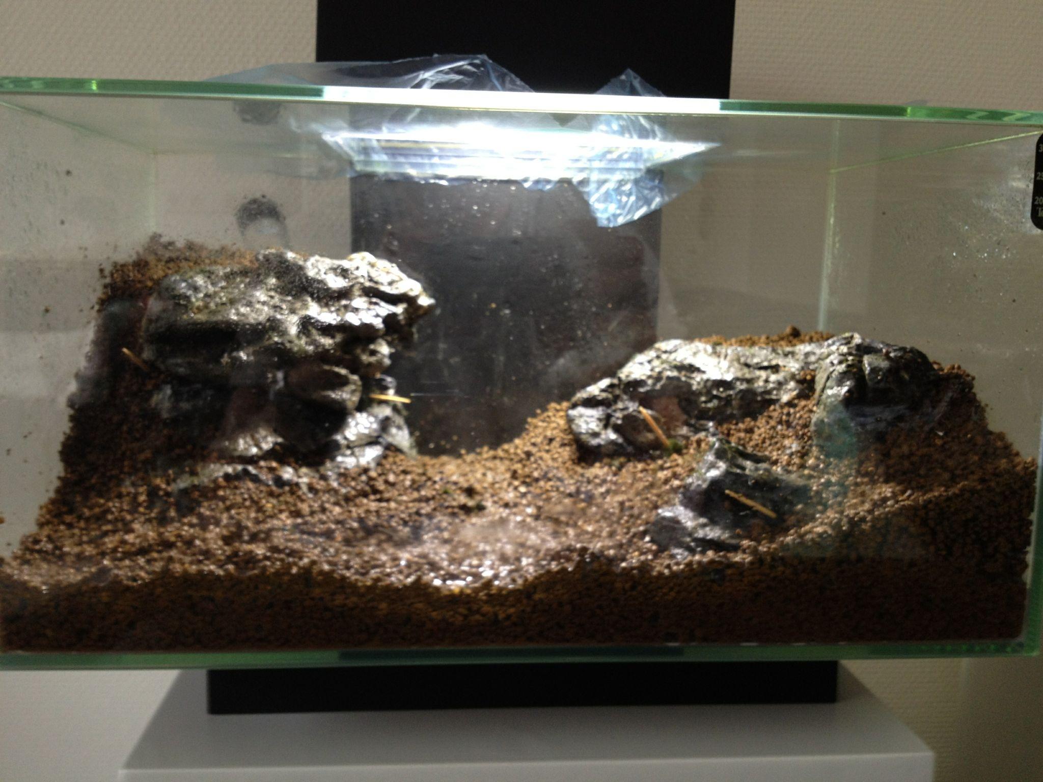 Garnalen aquarium huizen shrimp snails crayfish and other for Aquarium edge